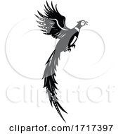 Silhouette Of Common Or Ring Necked Pheasant Flying Up Retro Black And White
