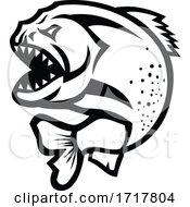 Angry Piranha Jumping Up Isolated Black And White