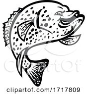 Crappie Fish Jumping Up Mascot Black And White