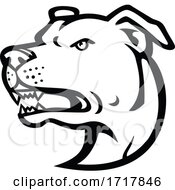 Poster, Art Print Of American Staffordshire Terrier Head Mascot Black And White