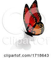 07/14/2020 - Red And Orange Butterfly With A Shadow