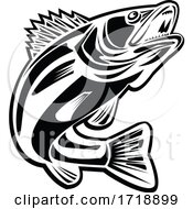 Barramundi Fish Jumping Up Retro Black And White