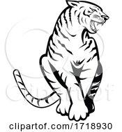 Bengal Tiger Growling Sitting Front Woodcut Retro Black And White