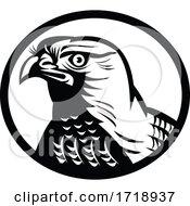 Head Of A Northern Goshawk A Medium Large Diurnal Raptor Oval Retro Woodcut Black And White