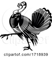 Wild Turkey Marching Side View Retro Black And White
