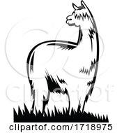 Suri Alpaca Or Huacaya Side View Retro Black And White