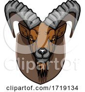 Hunting Sports Trophy Taxidermy Mounted Ibex Head
