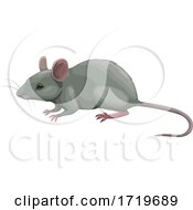 Poster, Art Print Of Mouse