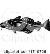 Atlantic Cod Gadus Morhua Or Codling Side Woodcut Retro Black And White
