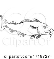 Atlantic Cod Gadus Morhua Or Codling Side View Line Art Style Black And White