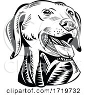Head Of A Labrador Retriever Gun Dog Retro Woodcut Black And White