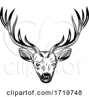 Head Of Stag Buck Or Deer Front View Retro Woodcut Black And White