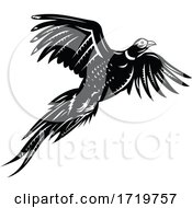Ring Necked Pheasant Flying Retro Black And White