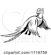 Ring Necked Pheasant Flying Up Cartoon Black And White