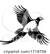 Ring Necked Pheasant Flying Up Retro Black And White