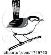 Wren Brown Passerine Bird Perching On Branch Retro Black And White