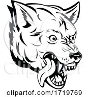 Head Of An Aggressive And Angry Gray Wolf Grey Wolf Or Canis Lupus Mascot Black And White