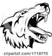 Head Of An Aggressive And Angry Gray Wolf Grey Wolf Low Angle Mascot Black And White