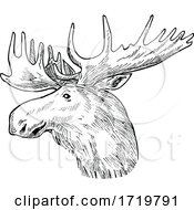 Head Of A Bull Moose Or Elk Alces Alces Scratchboard Retro Black And White