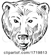 Head Of A Brown Bear Ursus Arctos Or Grizzly Bear Scratchboard Style Black And White