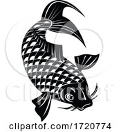 Koi Jinli Or Nishikigoi Brocaded Carp A Colored Variety Of The Amur Carp Swimming Down Retro Woodcut Black And White