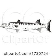 Barracuda Or Sphyraena Barracuda Swimming Side Retro Black And White