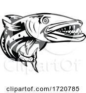 Barracuda Or Sphyraena Barracuda Swimming Up Woodcut Retro Black And White by patrimonio