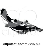 Duck Billed Platypus Ornithorhynchus Anatinus Swimming Down Retro Woodcut Black And White