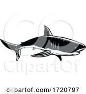 Great White Shark Carcharodon Carcharias White Shark Or White Pointer Side View Retro Woodcut Black And White