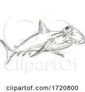 Great Hammerhead Sphyrna Mokarran The Largest Species Of Hammerhead Shark Etching Black And White Style
