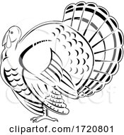 Wild Turkey A Large Bird In The Genus Meleagris Iewed From Side Retro Woodcut Black And White