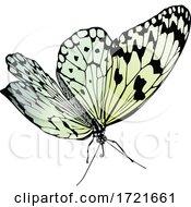 Gradient Butterfly