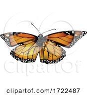 09/19/2020 - Butterfly