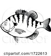 Bluegill Bream Brim Sunny Or Copper Nose Fish Side View Retro Black And White