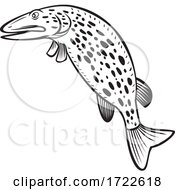 Northern Pike Esox Lucius Carnivorous Fish Of The Genus Esox Jumping Up Cartoon Black And White