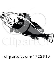 Red Drum Spottail Bass Redfish Channel Bass Or Puppy Drum Jumping Woodcut Black And White Retro