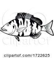 Pigfish Orthopristis Chrysoptera Or Piggy Perch Side View Cartoon Black And White