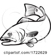 Spottail Bass Red Drum Redfish Channel Bass Or Puppy Drum Jumping Down Black And White Retro