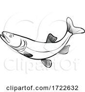Colorado Pikeminnow Ptychocheilus Lucius Or Colorado Squawfish Leaping Retro Black And White