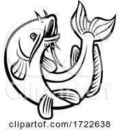 Blue Catfish Ictalurus Furcatus Jumping Cartoon Black And White