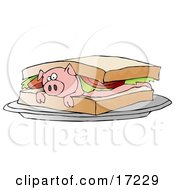 Poster, Art Print Of Confused Pink Pig Lying On Its Belly Under Lettuce And Tomato Between Slices Of White Bread On A Blt Sandwich