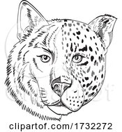Head Of Half Timber Wolf And Half Jaguar Panther Or Leopard Drawing Black And White