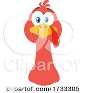 Poster, Art Print Of Turkey Bird Face