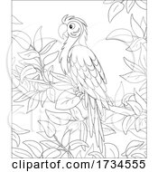 01/08/2021 - Macaw Parrot