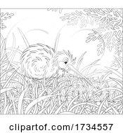 Black And White Kiwi Bird