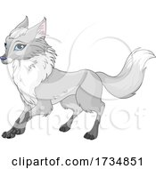 Cute Blue Eyed Fox