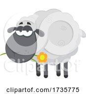 Black Sheep Chewing On A Flower by Hit Toon