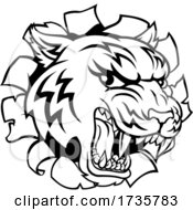 01/26/2021 - Black And White Tiger Mascot Head Breaking Through A Wall