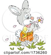 Bunny Rabbit Playing She Loves Me She Loves Me Not With Flower Petals