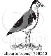 Spur Winged Plover Or Masked Lapwing Standing Woodcut Black And White